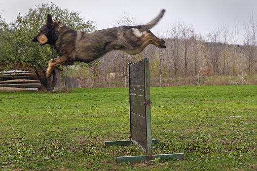 Výsledek obrázku pro cvičište pro psy